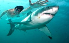 """Michael Phelps races shark for Discovery's """"Shark Week""""."""