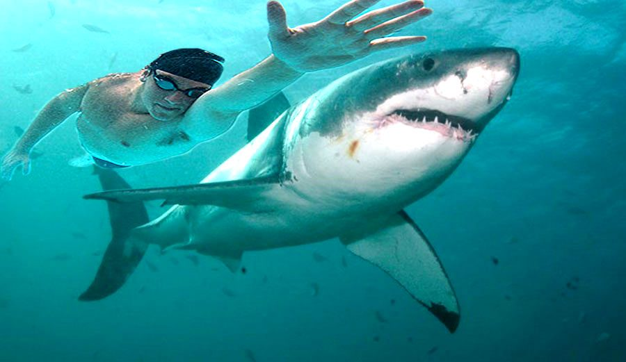 Michael+Phelps+races+shark+for+Discovery%27s+%22Shark+Week%22.